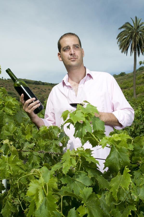 Bemannen Sie das Anhalten einer Weinflasche in einem Weinberg lizenzfreie stockfotos