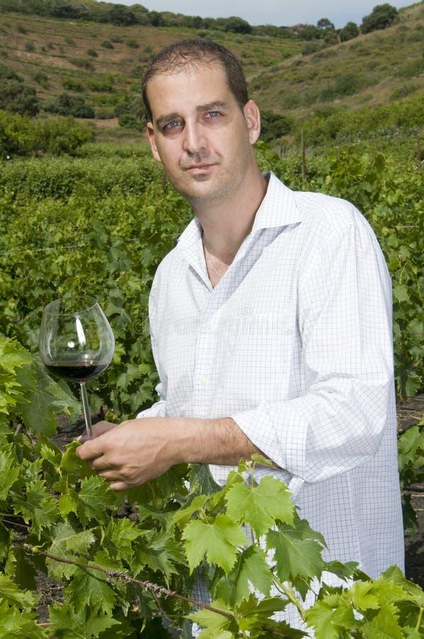 Bemannen Sie das Anhalten eines Glases Weins in einem Weinberg lizenzfreie stockfotos