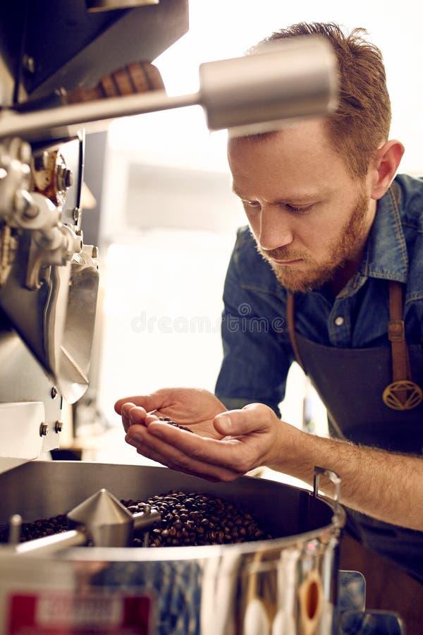Bemannen Sie das Betrachten von Röstkaffeebohnen von einer Bratmaschine stockfotos