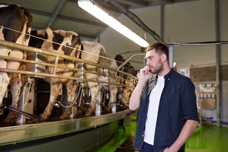 Bemannen Sie das Ersuchen Mobiltelefon und um Kühe an der Molkerei stockfotos