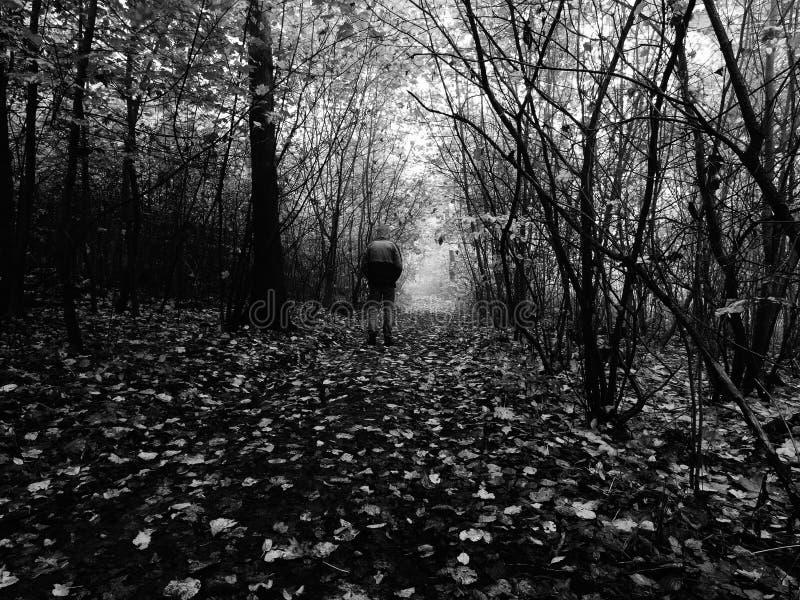 Bemannen Sie das Gehen durch Fußweg im dunklen nebelhaften Wald im Herbst stockbild