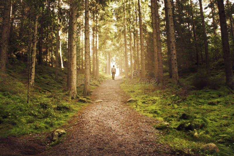 Bemannen Sie das Gehen herauf Weg in Richtung zum Licht im magischen Wald lizenzfreie stockfotos
