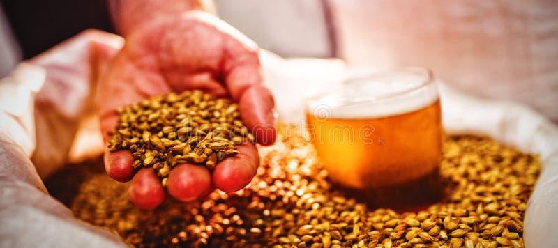 Bemannen Sie das Halten der Gerste durch Bierglas im Sack an der Brauerei lizenzfreie stockfotos