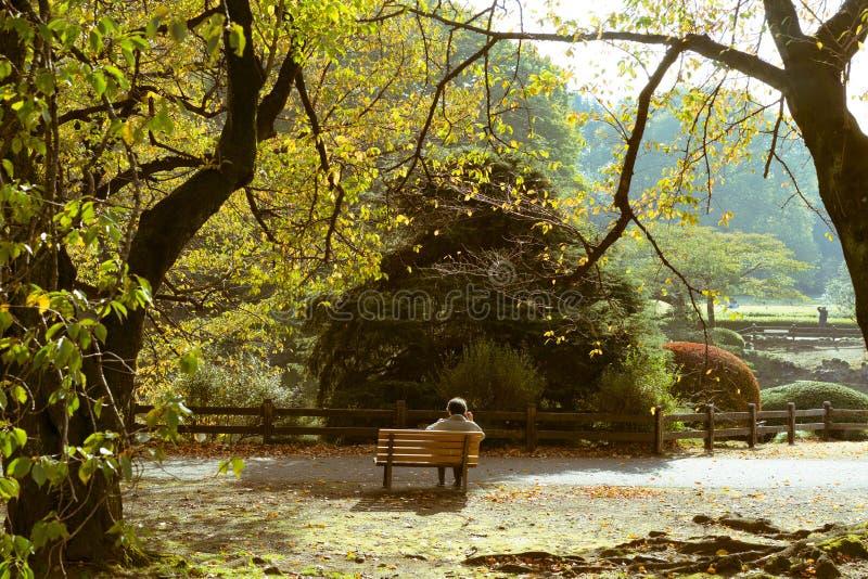 Bemannen Sie das Sitzen auf einer Bank in einem japanischen Garten in Tokyo, Japan stockbild