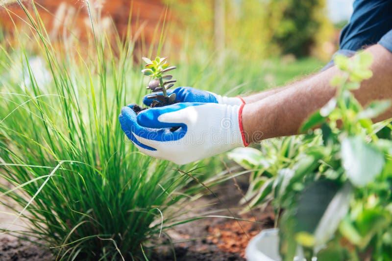 Bemannen Sie das tragende blaue Hemd, das beim Haben der ersten Erfahrung im Gartenbau aufgeregt glaubt lizenzfreies stockbild