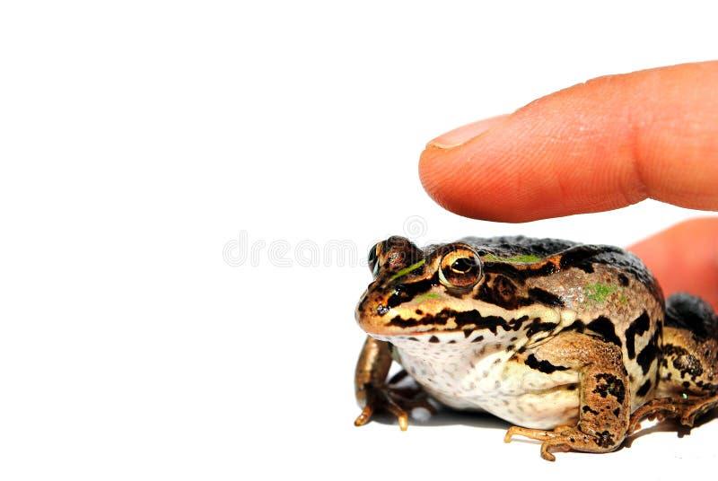 Bemannen Sie den Finger, der einen Frosch anstelle von einer Maus klickt lizenzfreies stockfoto