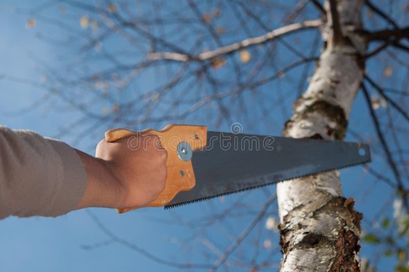 Bemannen Sie den Schnitt der Niederlassung eines Baums mit sah lizenzfreie stockbilder