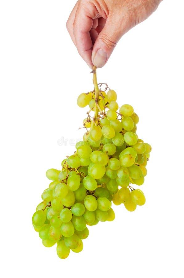 Bemannen Sie die Hand, die ein Bündel grüne Trauben hält stockfotografie