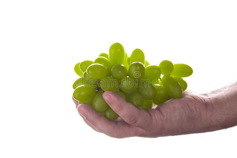 Bemannen Sie die Hand, die ein Bündel grüne Trauben hält, lokalisiert auf weißem Hintergrund stockbilder