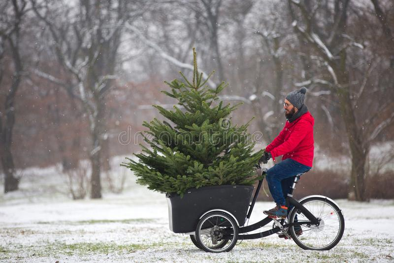 Bemannen Sie mit einem großen Weihnachtsbaum nach Hause radfahren lizenzfreies stockbild