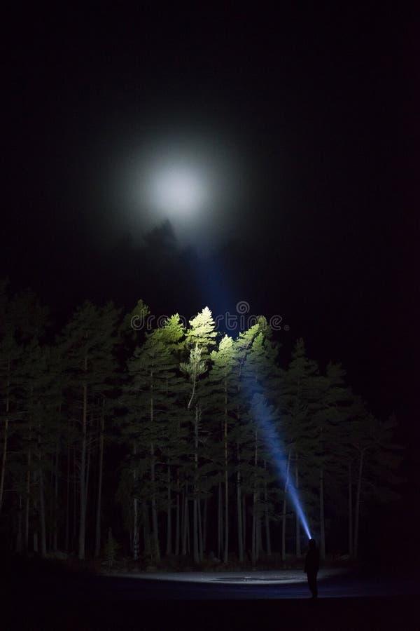 Bemannen Sie stehendes im Freien nachts glänzend mit Taschenlampe herauf den Himmel und an den Bäumen im Wald lizenzfreie stockbilder