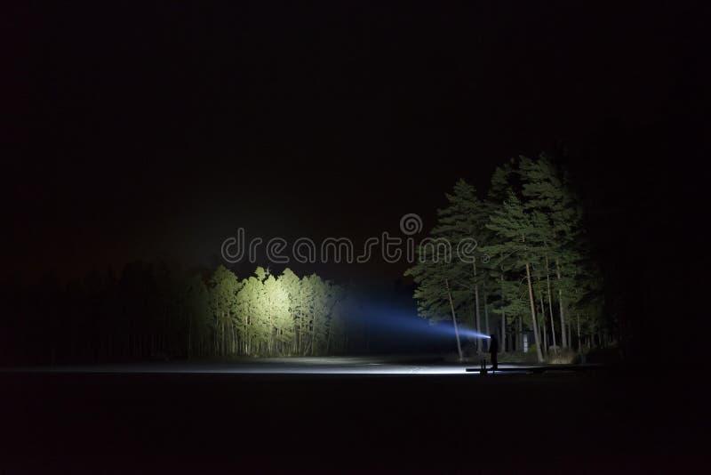 Bemannen Sie stehendes im Freien nachts glänzend mit Taschenlampe herauf den Himmel und an den Bäumen im Wald lizenzfreies stockfoto