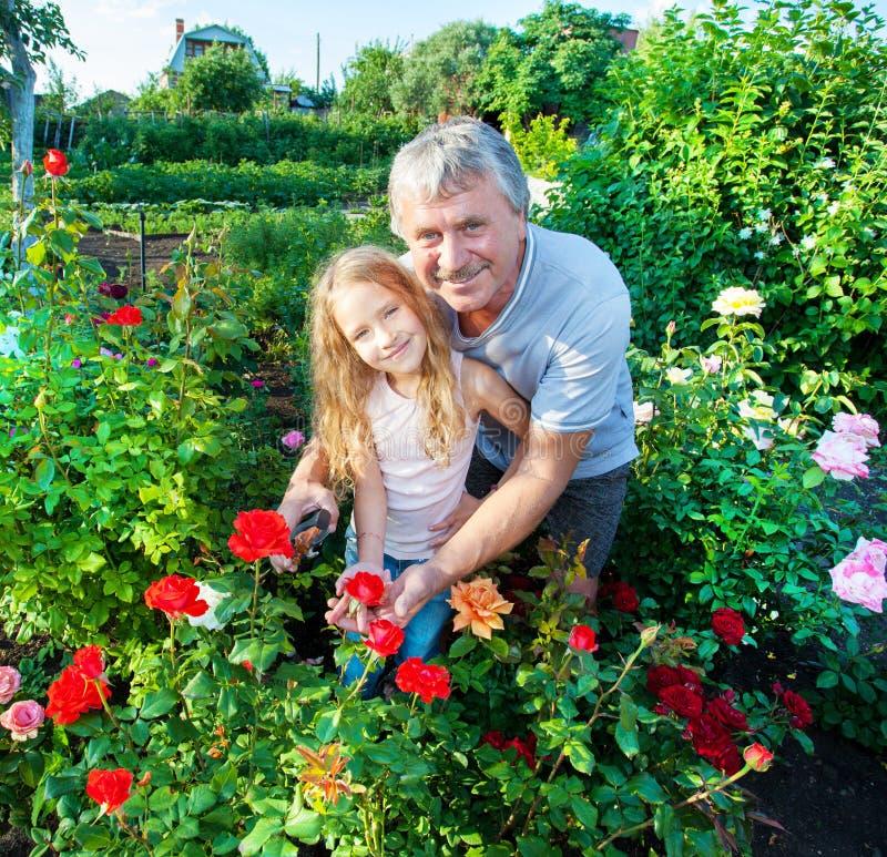 Bemannen Sie witn Mädchen, das für Rosen im Garten sich interessiert stockfotos