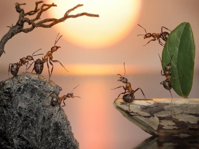 Bemanning die van mieren terug, fantasie naar huis vaart stock afbeeldingen
