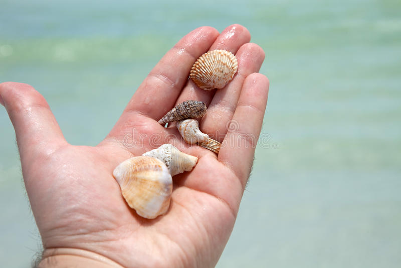 Übergeben Sie das Halten von Seashells stockbild