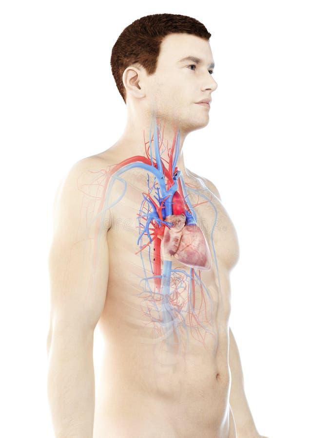 Bemannt Herz lizenzfreie abbildung