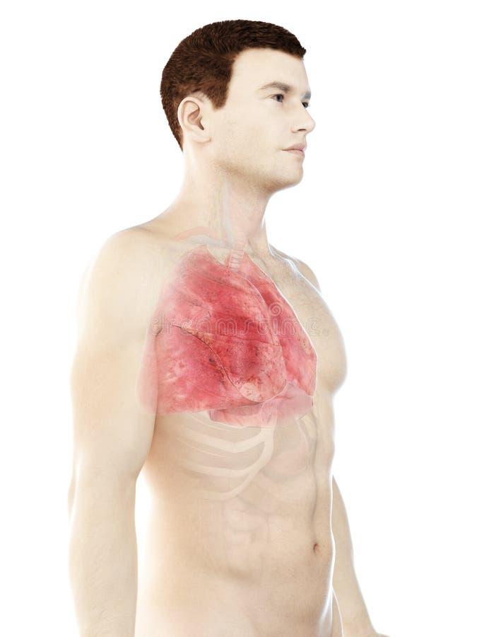 Bemannt Lunge vektor abbildung