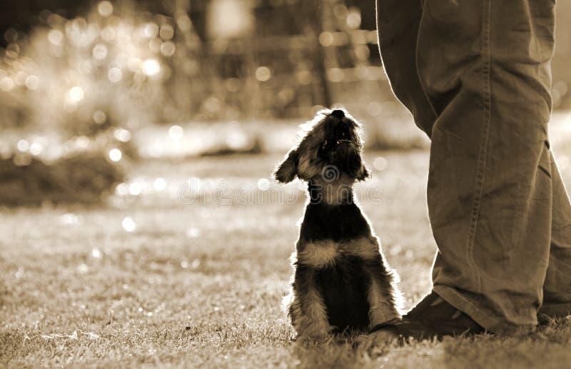 Bemant beste vriend het houden van puppyhond bij eigenaarsvoeten stock foto