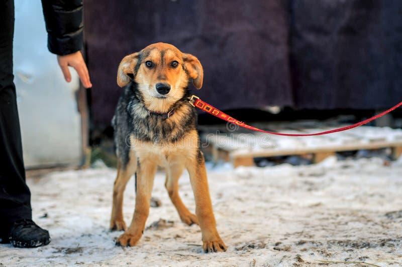 Bemant hand strijkend de verlaten hond stock foto's