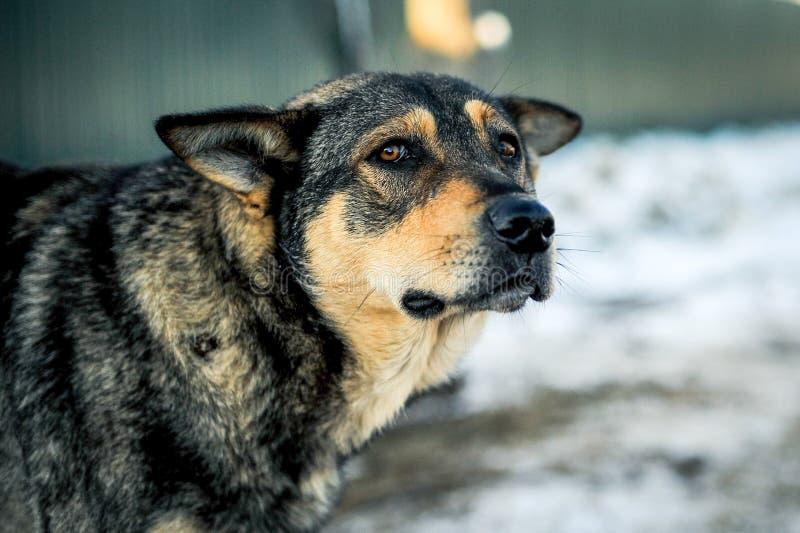 Bemant hand strijkend de verlaten hond royalty-vrije stock foto