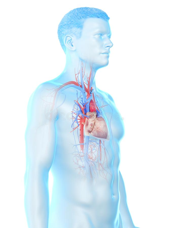 A bemant hart stock illustratie