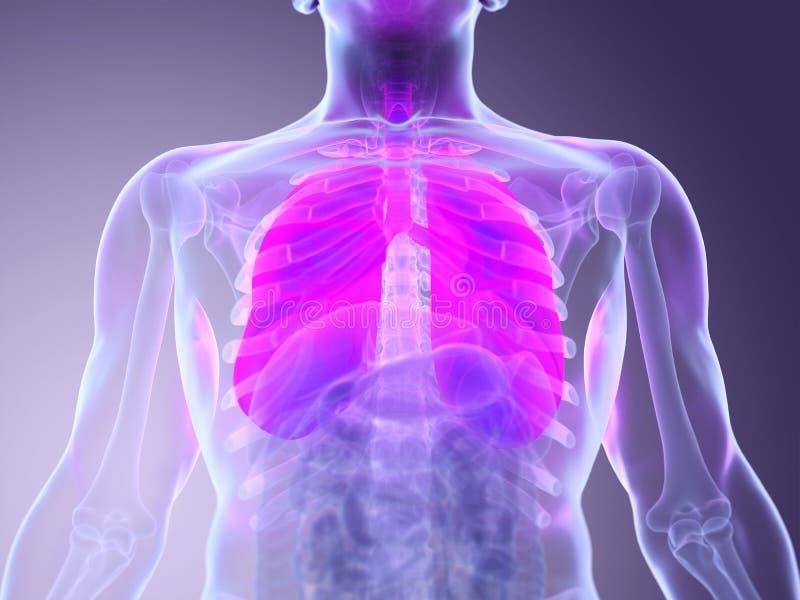 A bemant longen stock illustratie