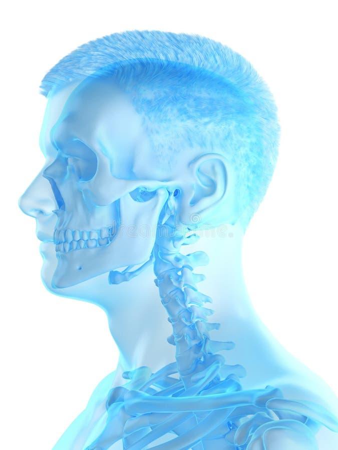 A bemant skeletachtige hals stock illustratie