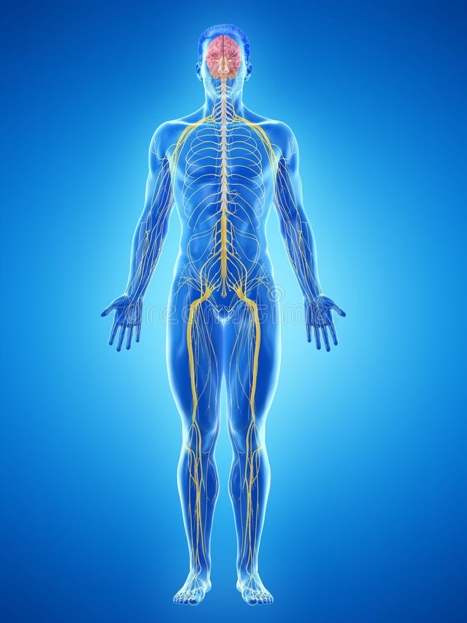 A bemant zenuwen vector illustratie