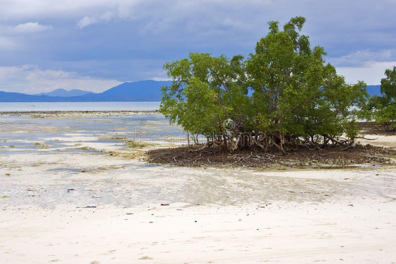 Bemoeiziek ben    schuur lagune stock afbeeldingen