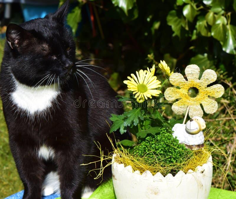 Bemoeizieke katerzitting dichtbij gele bloemen en een wit ceramisch schaap in de tuin royalty-vrije stock afbeeldingen