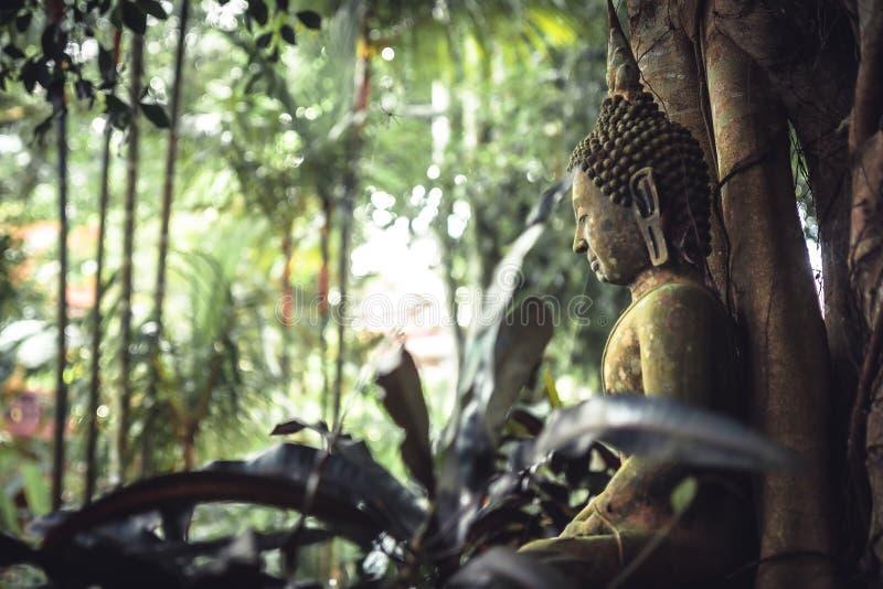 Bemost de steenstandbeeld van zittingsboedha in weelderige tropische tuin onder weelderig tropisch gebladerte in tropisch bos als stock fotografie