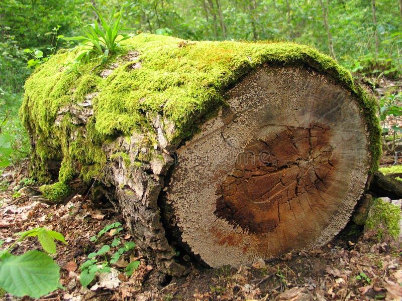 Download Bemost logboek stock afbeelding. Afbeelding bestaande uit gras - 290593
