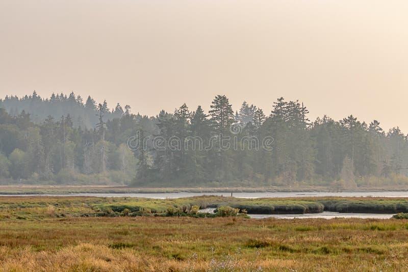 bemoste groene bos en diepe gouden grassen met water royalty-vrije stock foto's