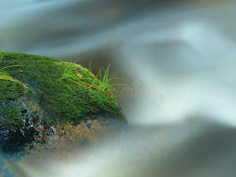 Bemoste kei met grasbladeren in de bergrivier Verse kleuren van gras, donkergroene kleur van nat mos en blauw melkachtig water royalty-vrije stock afbeelding
