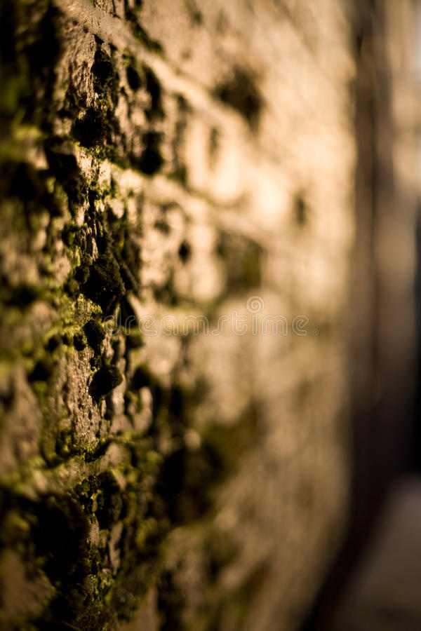Bemoste muur stock afbeeldingen