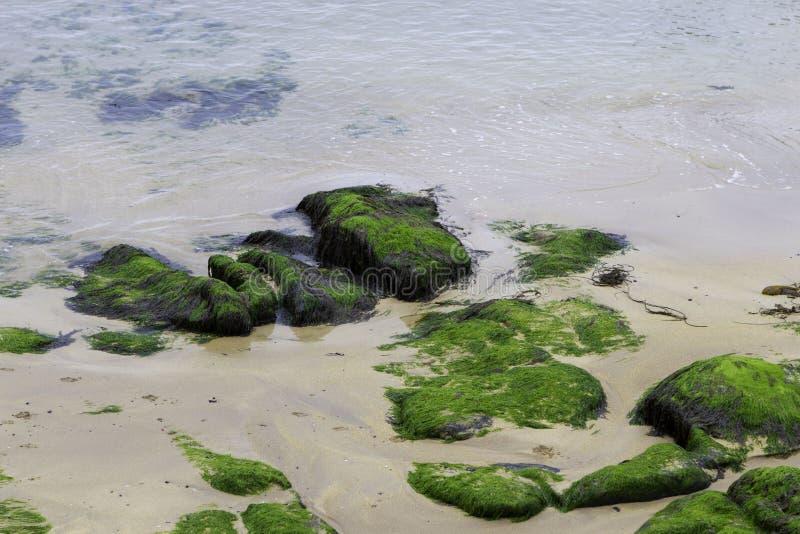 Bemoste rotsen en zand op zee kust royalty-vrije stock fotografie