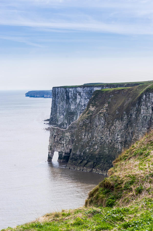 Bempton cliffs 2. Bempton cliffs in East riding of yorkshire royalty free stock photography