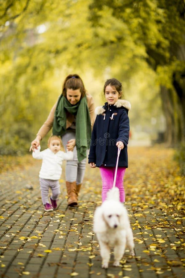Bemuttern Sie und zwei Mädchen, die mit einem Hund im Herbstpark gehen lizenzfreies stockfoto