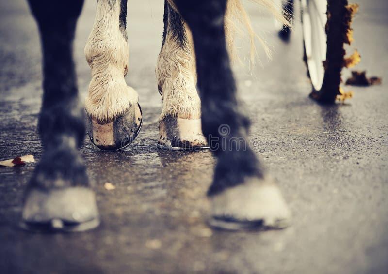 Ben av hästen exploaterade i vagnen royaltyfri bild
