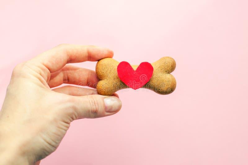 Ben-format kex för hund och röd hjärta i kvinnahand på rosa bakgrund, älsklings- omsorg för begrepp arkivbild