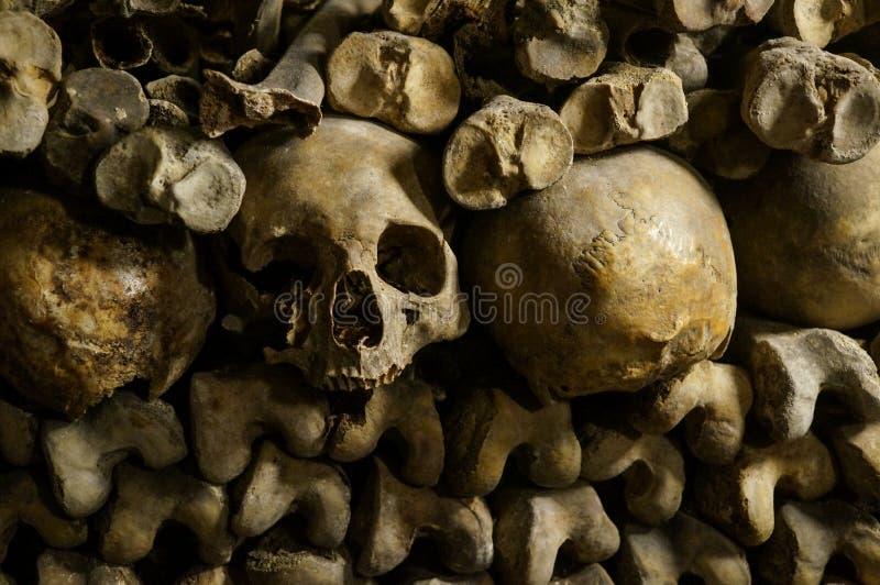 Ben, skelett och skallar arkivbilder