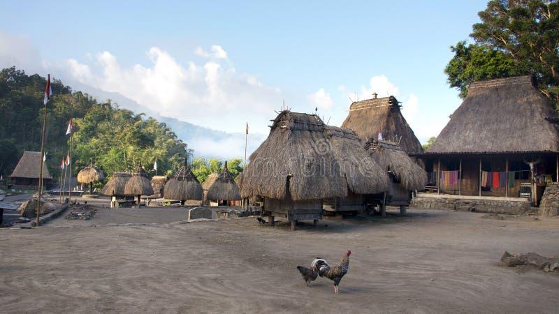 Bena un villaggio tradizionale con le capanne dell'erba della gente di Ngada e di due polli sul quadrato in Flores fotografia stock