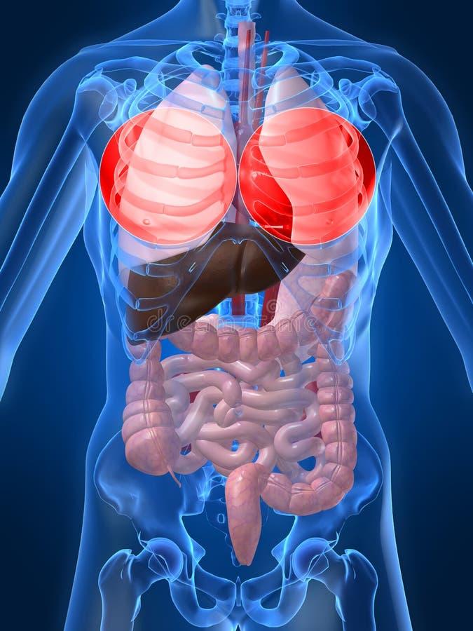 Benadrukte longen royalty-vrije illustratie