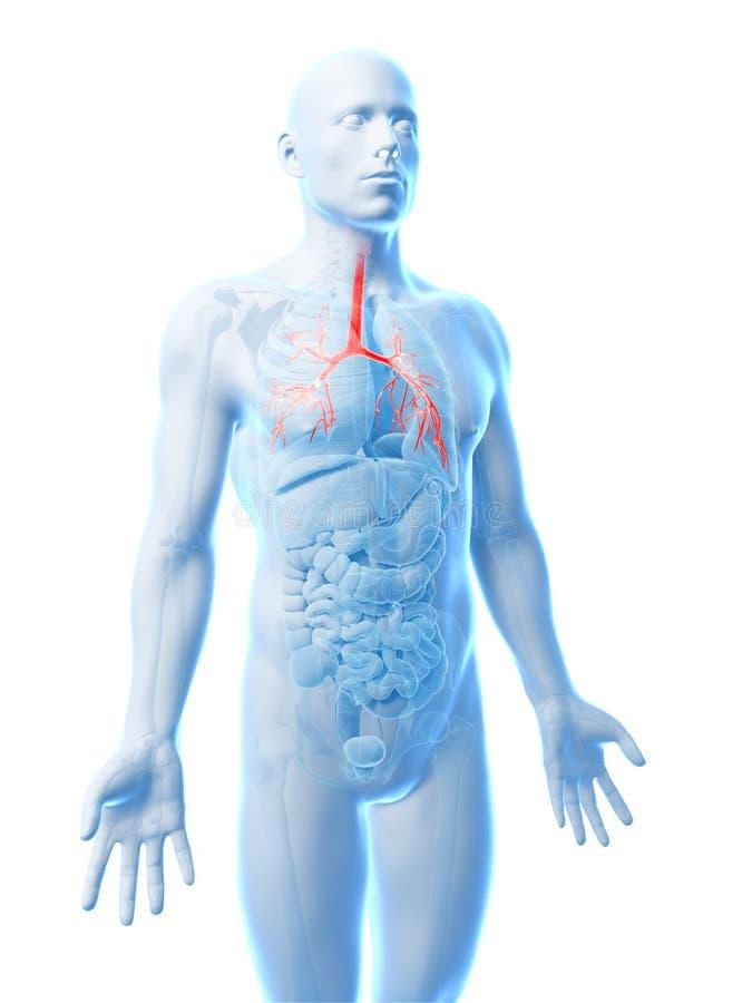 Benadrukte menselijke bronchiën stock illustratie