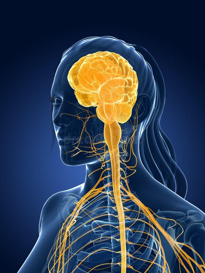 Benadrukte vrouwelijke hersenen stock illustratie