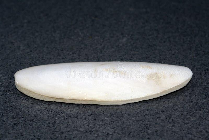 benbläckfisk arkivfoto