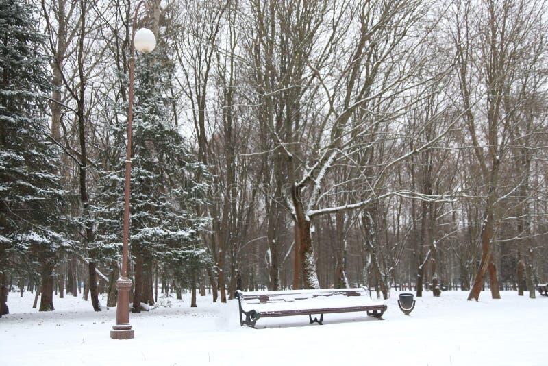 Bench в парке стоковые фото