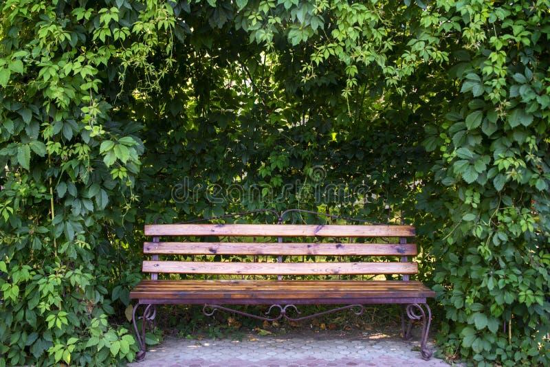 Bench в саде под курчавыми чащами одичалых виноградин стоковые фото