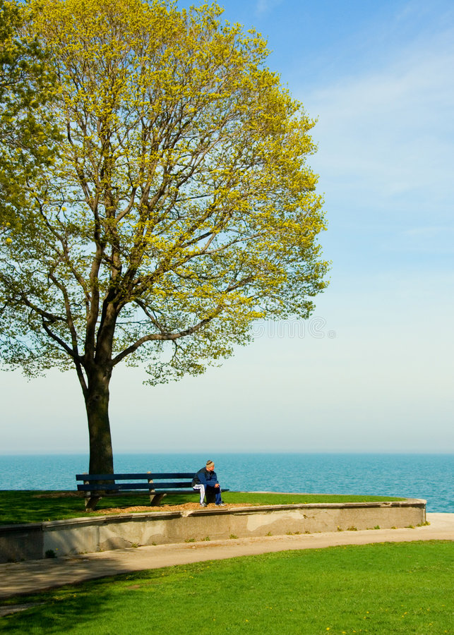 Download Bench stock photo. Image of tree, lake, bench, arrived - 1260104