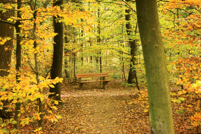Download Bench stock photo. Image of park, leafs, bench, thicket - 21861230